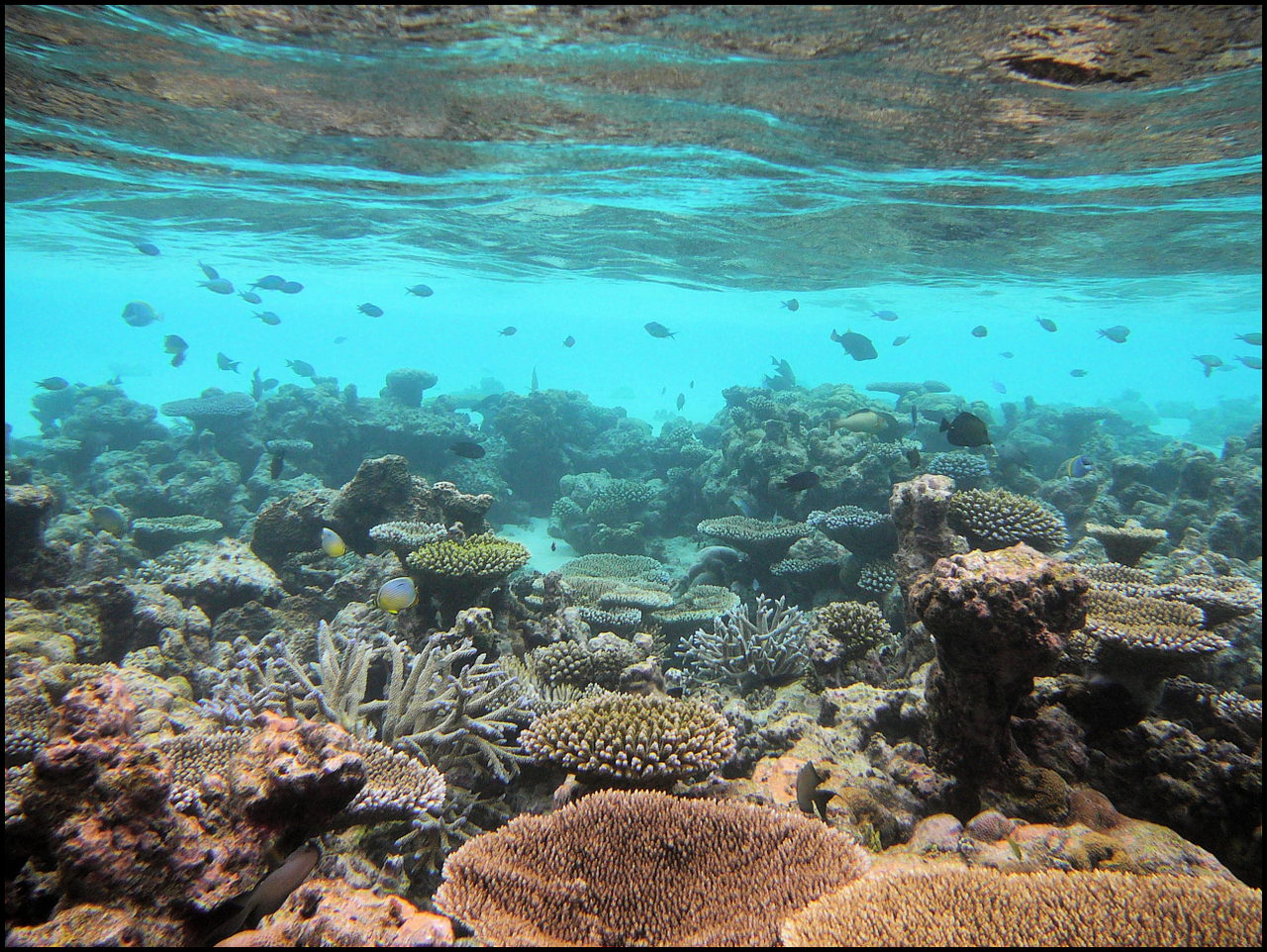 Divamboo-Hotels-Great-Barrier-reef